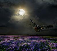 Lavender field in the moonlight Stock Illustration