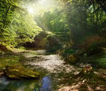 Fairy tale forest Stock Photos