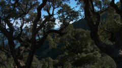 Massif de L'Esterel Cork Oaks Canopy Pan - stock footage