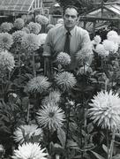 Stock Photo of British gardener with flower display