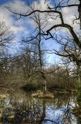 HDR photography at tree in the swamp Stock Photos