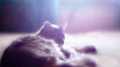 Kitten Lying On The Bed Stock Footage