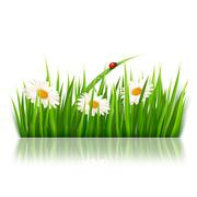 Nature background with green grass and flowers vector. Stock Illustration