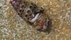 Hermit crab hiding itself under the sand Stock Footage