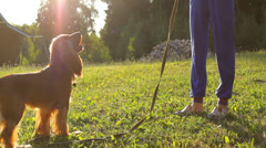 Girl training dog in the garden, playing, sun shining Stock Footage