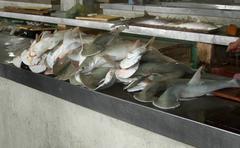 Hammerhead hait Kuvituskuvat