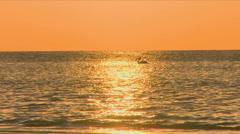 Australian Pelican Sunset Stock Footage