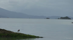 017 Florianopolis, cano passing by Stock Footage