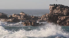 Cormorants 1 on rocks Stock Footage