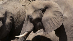elephant 12, close up, drinking - stock footage