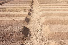 Preparation of soil ready for planting vegetable Stock Photos