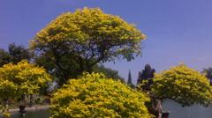 Yellow Bonsai Stock Footage