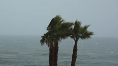 Palm Tree Near Ocean Swaying In Wind During Storm - stock footage
