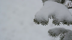 Close up fur in winter Stock Footage