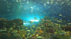 Huge schools of tropical fish swim with sharks in a coral reef Stock Footage