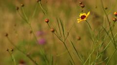 Rack Focus wildflowers Stock Footage