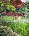 Stock Photo of red and green garden, kyoto, japan