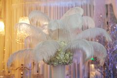 Ostrich feathers in a vase as a decoration Stock Photos