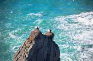 Stock Photo of storks on a cliff at western coast of portugal