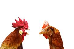 Concept of family argue with two isolated birds Stock Photos