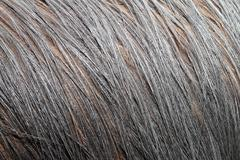 australian cassowaries ( casuarius ) plumage - stock photo