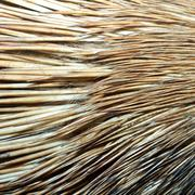 detail of real  crested porcupine fur - stock photo