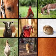 Nine animals from the farm Stock Photos