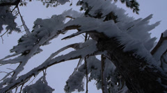 Frozen trees Stock Footage