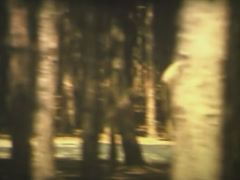 Wien, Safari park, Super 8mm film.  Archival, archive. Stock Footage