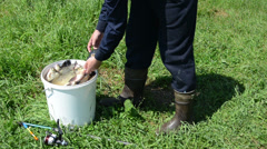 man measured weight of fish laid it back bucket to other fish - stock footage