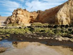 Algarve coast at low tide the ocean . Stock Photos