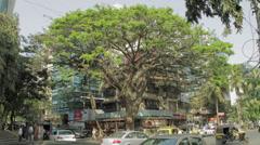 Mumbai Tree Time Laspe Stock Footage
