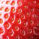 Stock Photo of Strawberry macro