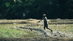 Man handles rice field - stock footage