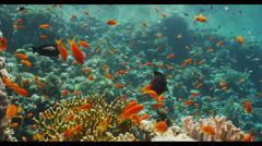 4K : wide, reef top scene Stock Footage