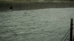 LA River during rainstorm, channel, pipes Stock Footage