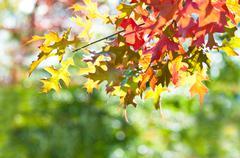 Autumn leaves Stock Photos