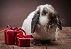 Stock Photo of rabbit and gift boxes