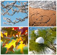 four seasons collage - stock photo