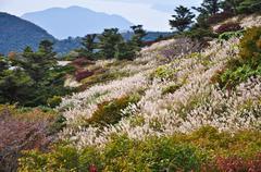 flower field on the mountian in autumn season at obama, japan - stock photo
