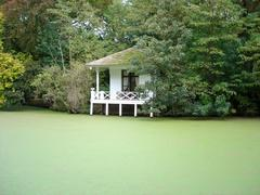 Gardenhouse in canal with duckweed Stock Photos