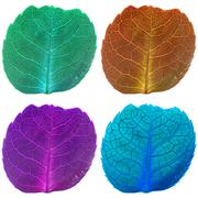 Four leaves with veins in fluorescent colors Stock Photos
