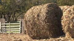 Corn stalk bales - stock footage