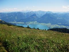 Medow in the alps Stock Photos