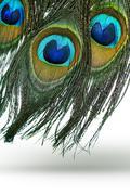 Peacock feathers Stock Photos