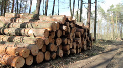 Forest felling, pile of logs - logging site. Stock Footage