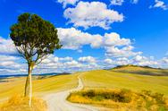 Stock Photo of tuscany, lonely tree and rural road. siena, orcia valley, italy.