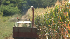 Harvesting silage maize with a thresher loading it into a trailer - stock footage