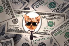 Artistic dollar bill with dog president - stock illustration