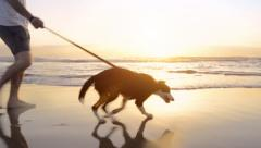 Happy man walking dog on beach lifestyle steadicam shot - stock footage
